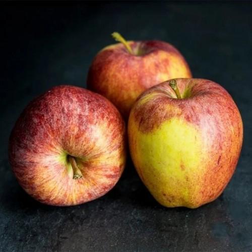 Apple R.Gala Each