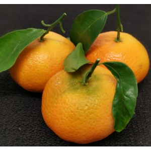 Leafy Clementines Each